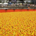 596050-the-great-brisbane-duck-race
