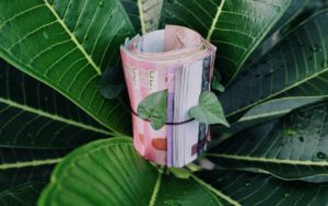 Free money tree