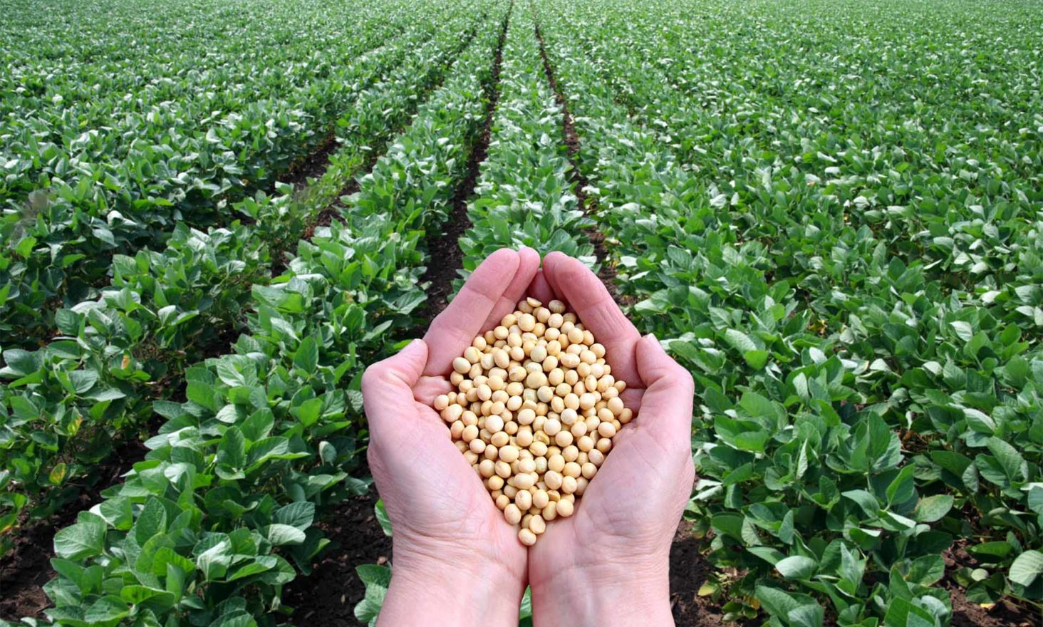 US and China Use Blockchain to Trade Soybeans