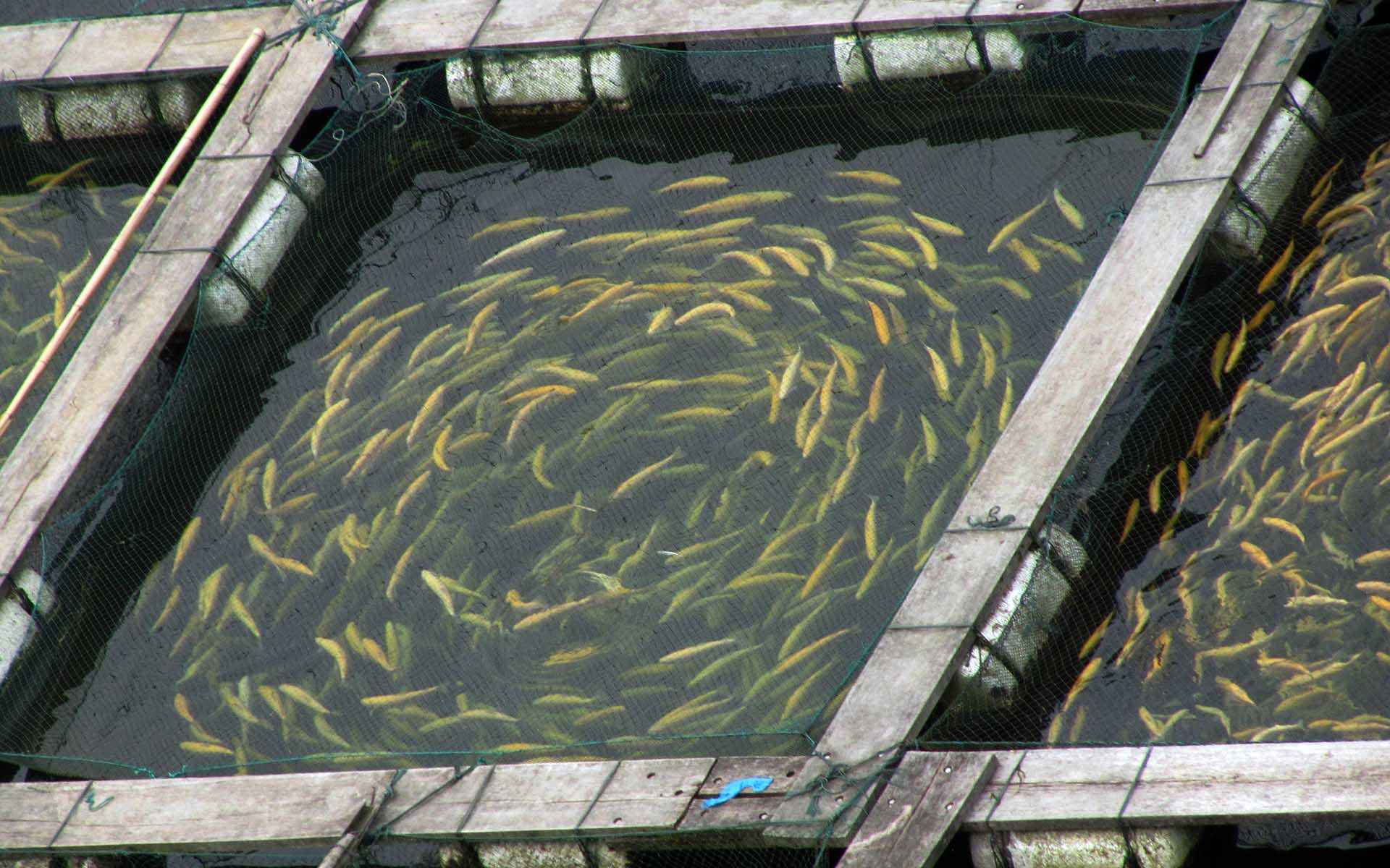 Canada's Sustainable Bitcoin Mining Used To Farm Fish And Crops