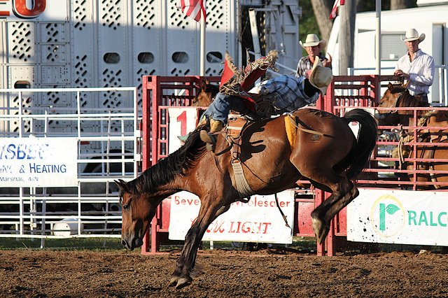 Not Their First Rodeo