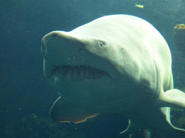 bitcoinist-coinbase-investigation-shark