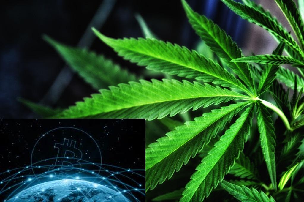 Marijuana Pot Problem