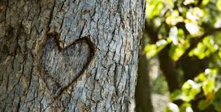 bitcoinist_heart_in_tree