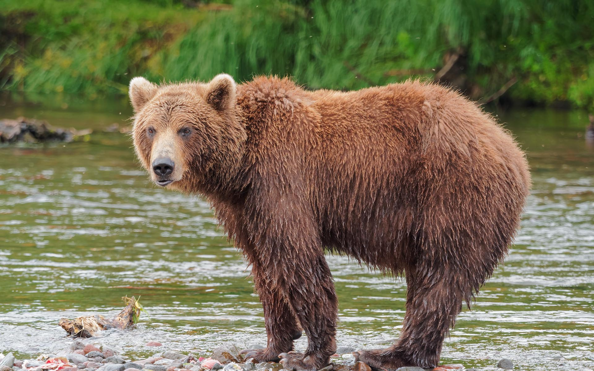 Up In a Down Market? 2 Projects That Could Help You Fend Off the Bear