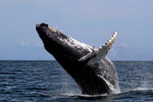 bitcoin whale no-fee transfer