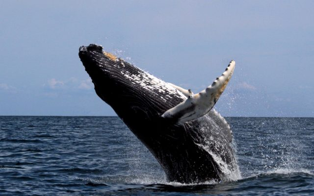 Bitcoin Whale Transfers $468 Million for 'Low Dollar Fee'