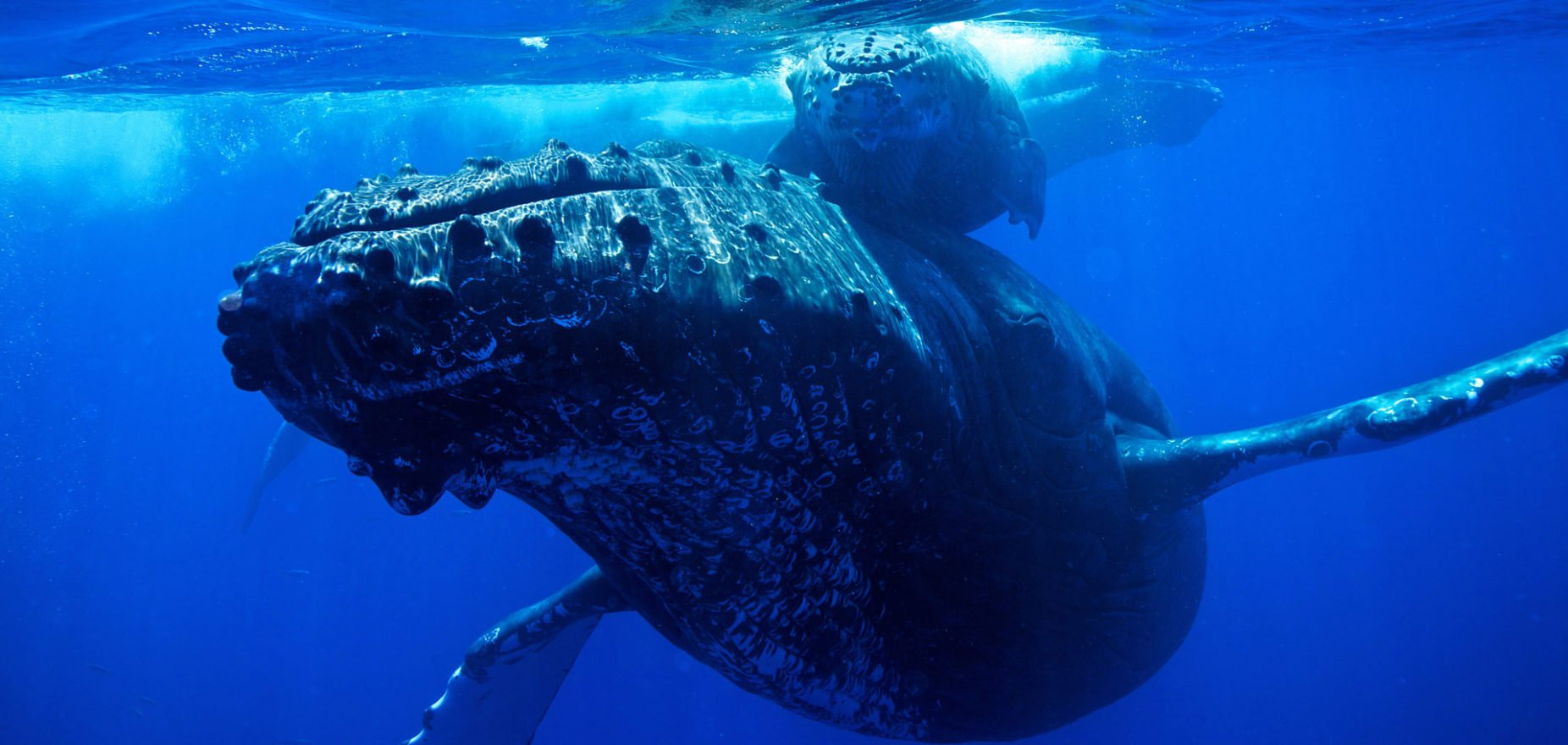 bitcoin whale moves 1 billion