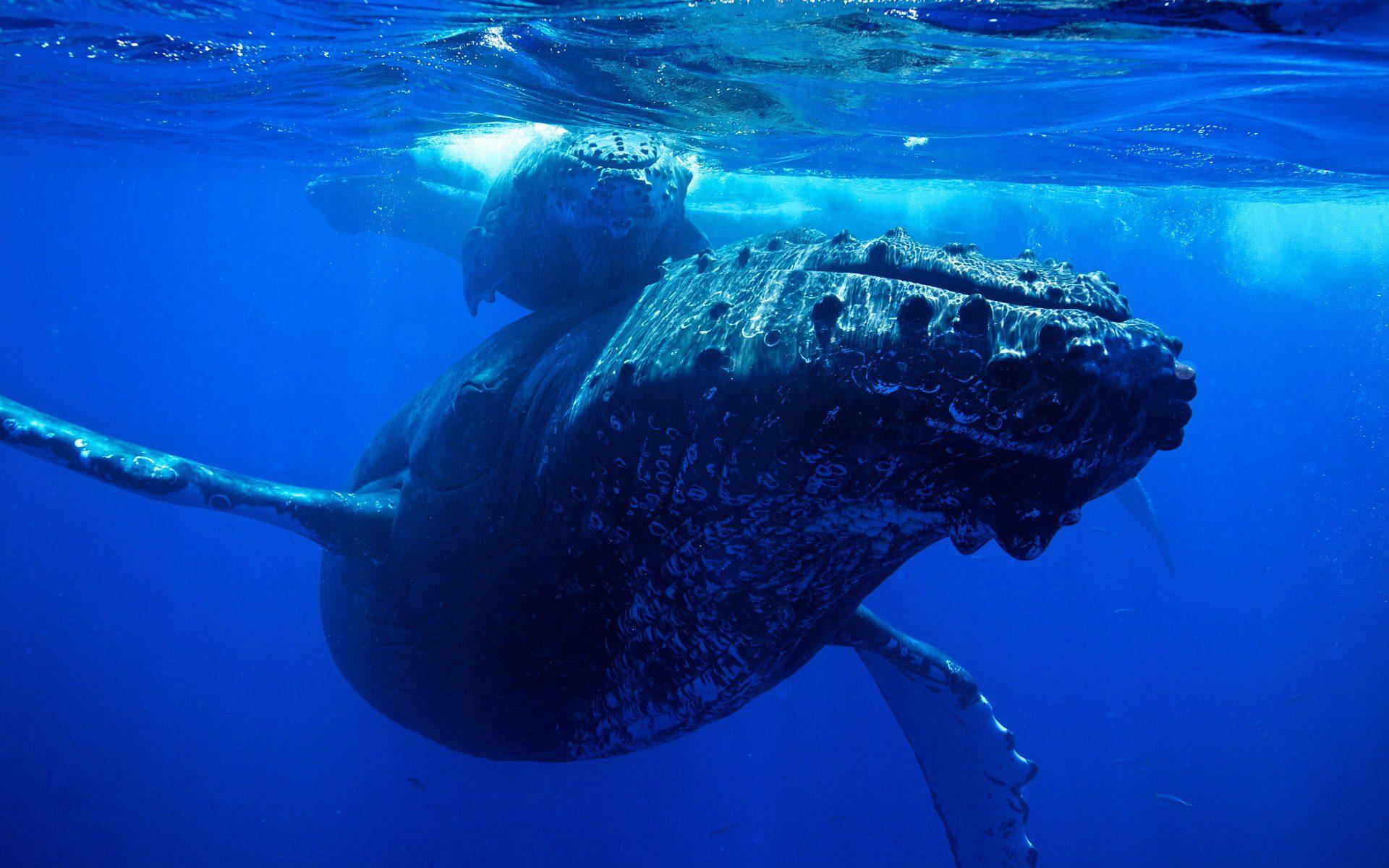 bitcoin whale moves 1 billion