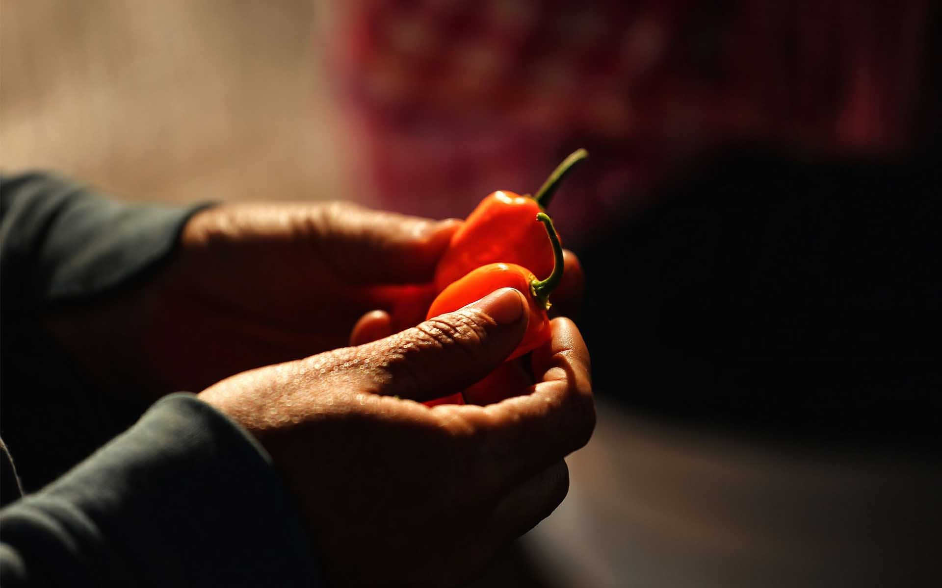 Cryptocurrency Gets Spicy with Habanero-backed Token