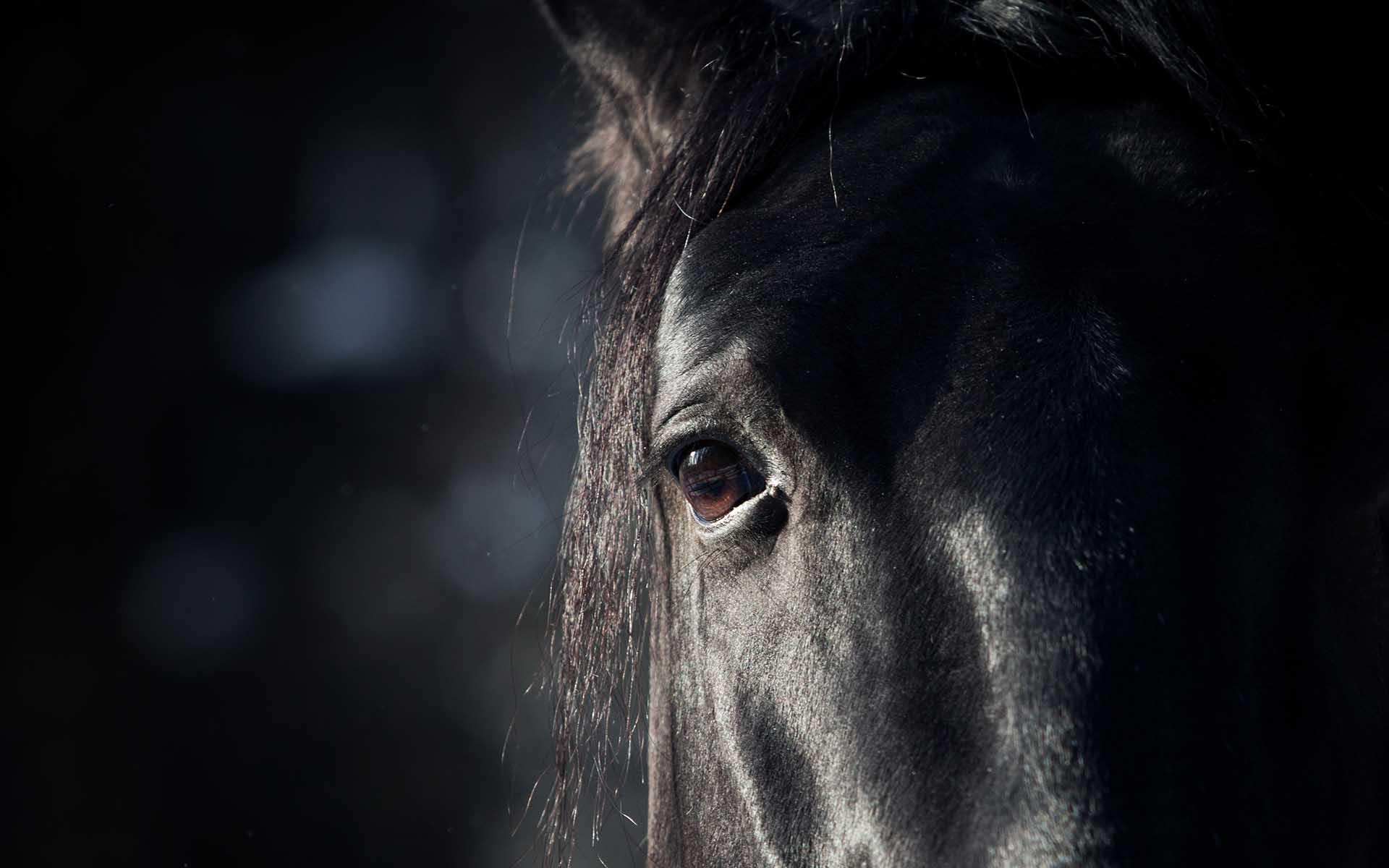 Paymon: The Dark Horse Of The Crypto Verse