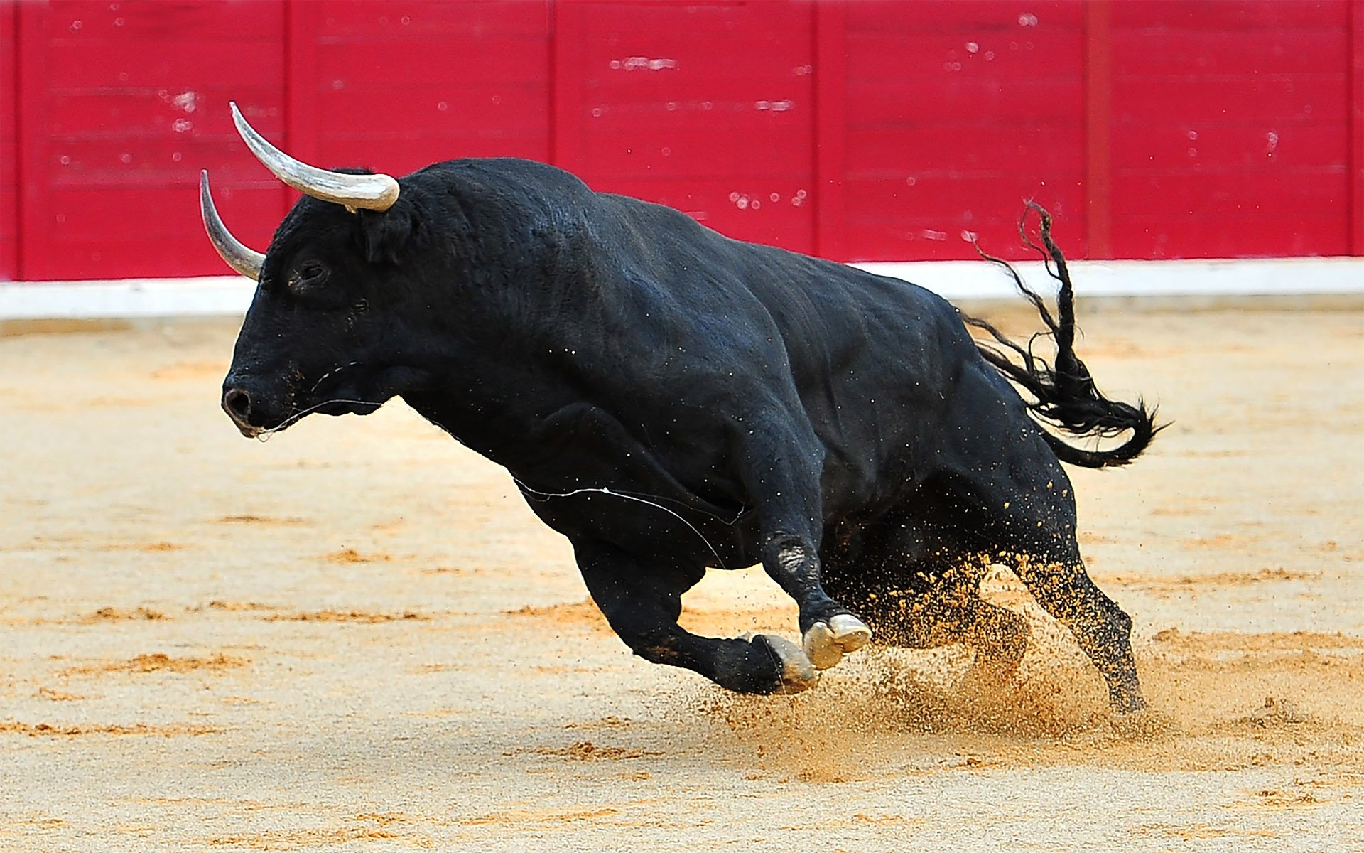 Bulls Still Bullish