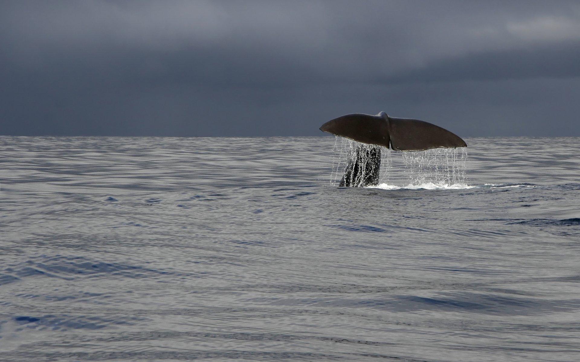Bitcoin whale Hodl