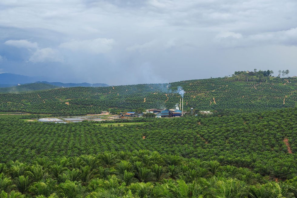 The goal of the collective is to establish a blockchain-based palm oil platform to tackle landscape-level sustainability problems.