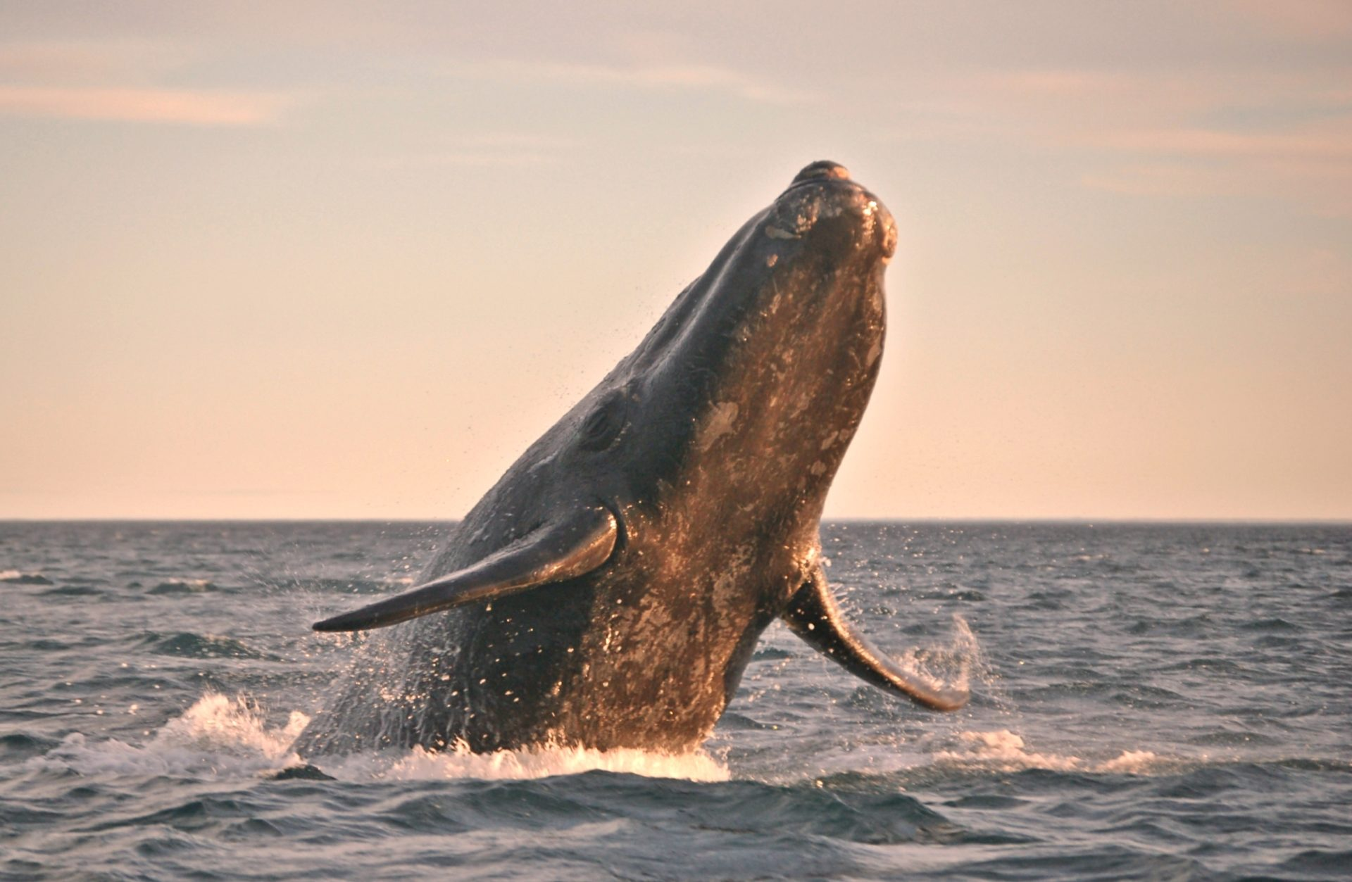 Bitcoin Whale activity picks up ahead of price swing