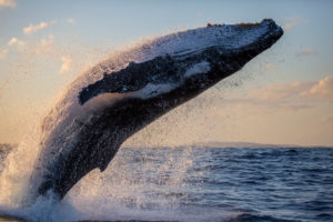 Chainalysis Finds That Bitcoin Whales Are Not the Sole Source of Market Volatility