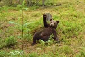 Bear market bakkt