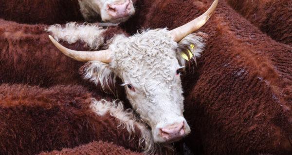 Bitcoin price analysis bulls