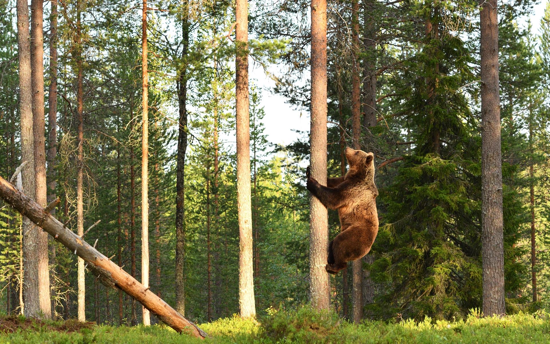 bear market bitcoin price btc price