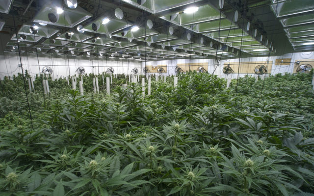 cannabis Bitcoin Mom