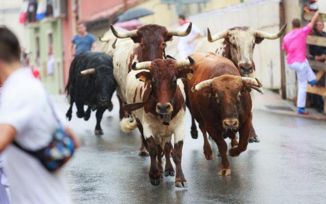 bitcoin price bulls bull run