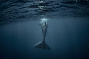 bitcoin whale mt.gox
