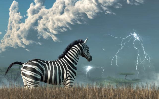 zebpay zebra lightning
