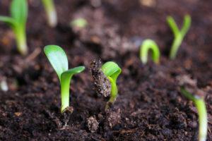 crypto spring bitcoin volume green shoots