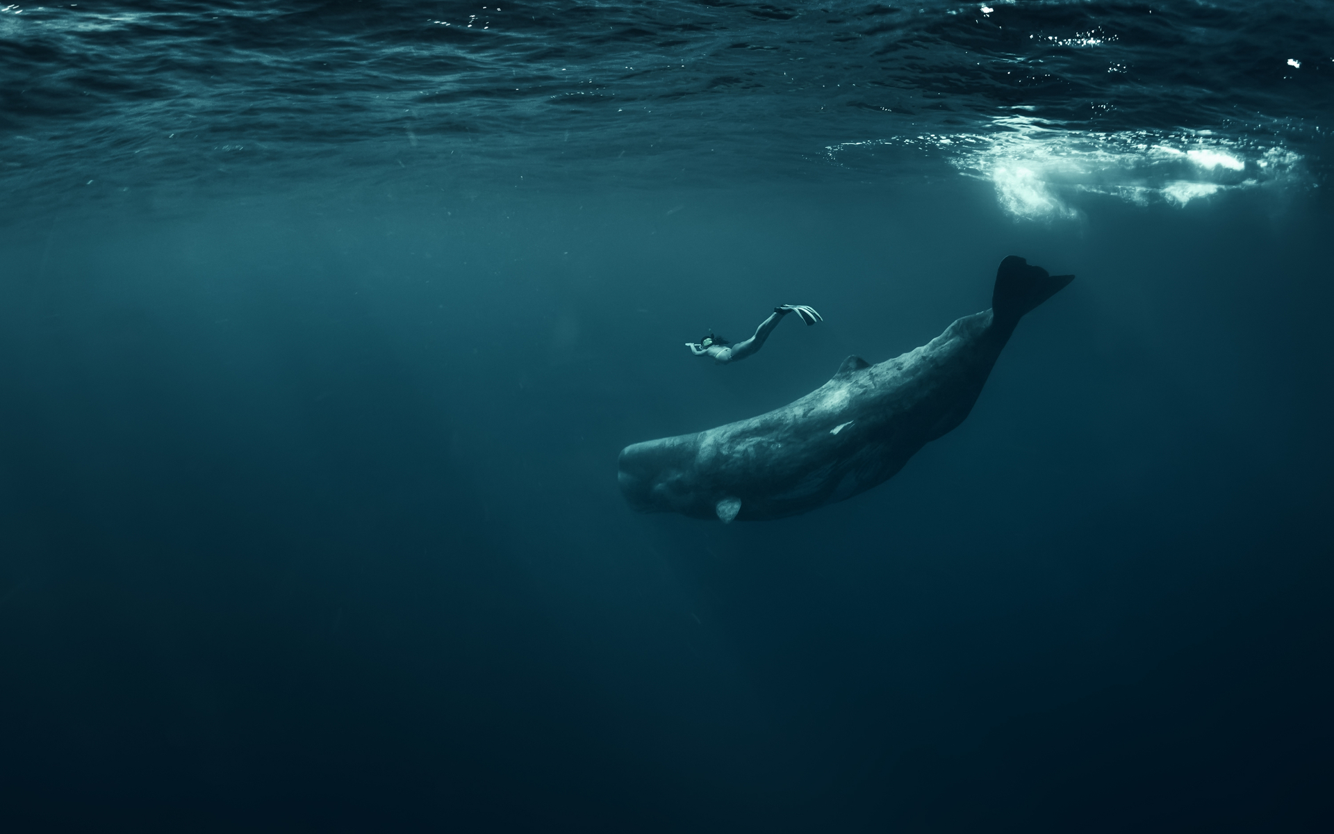 whale bitcoin