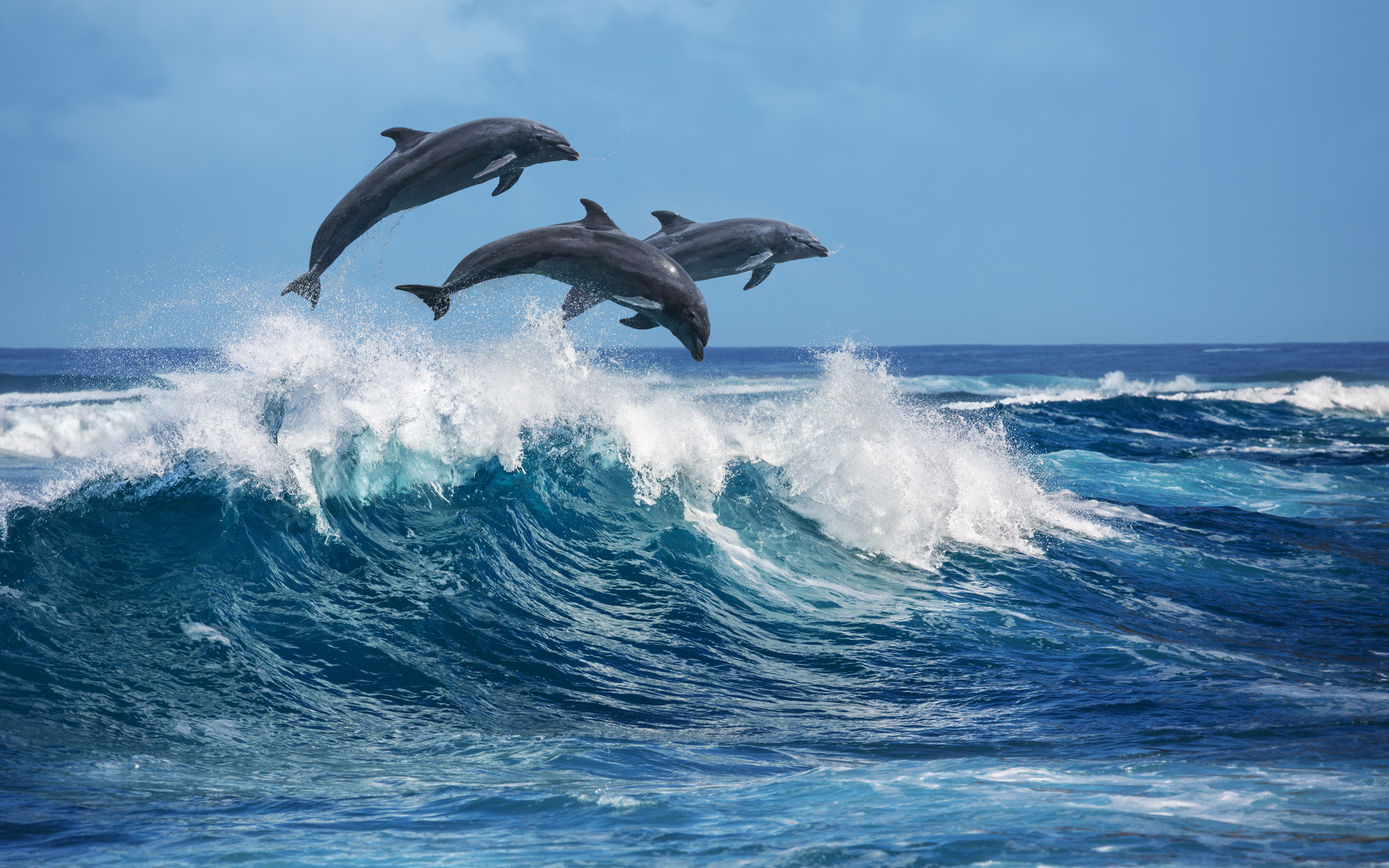 altcoins altcoin binance coin litecoin leo waves dolphins