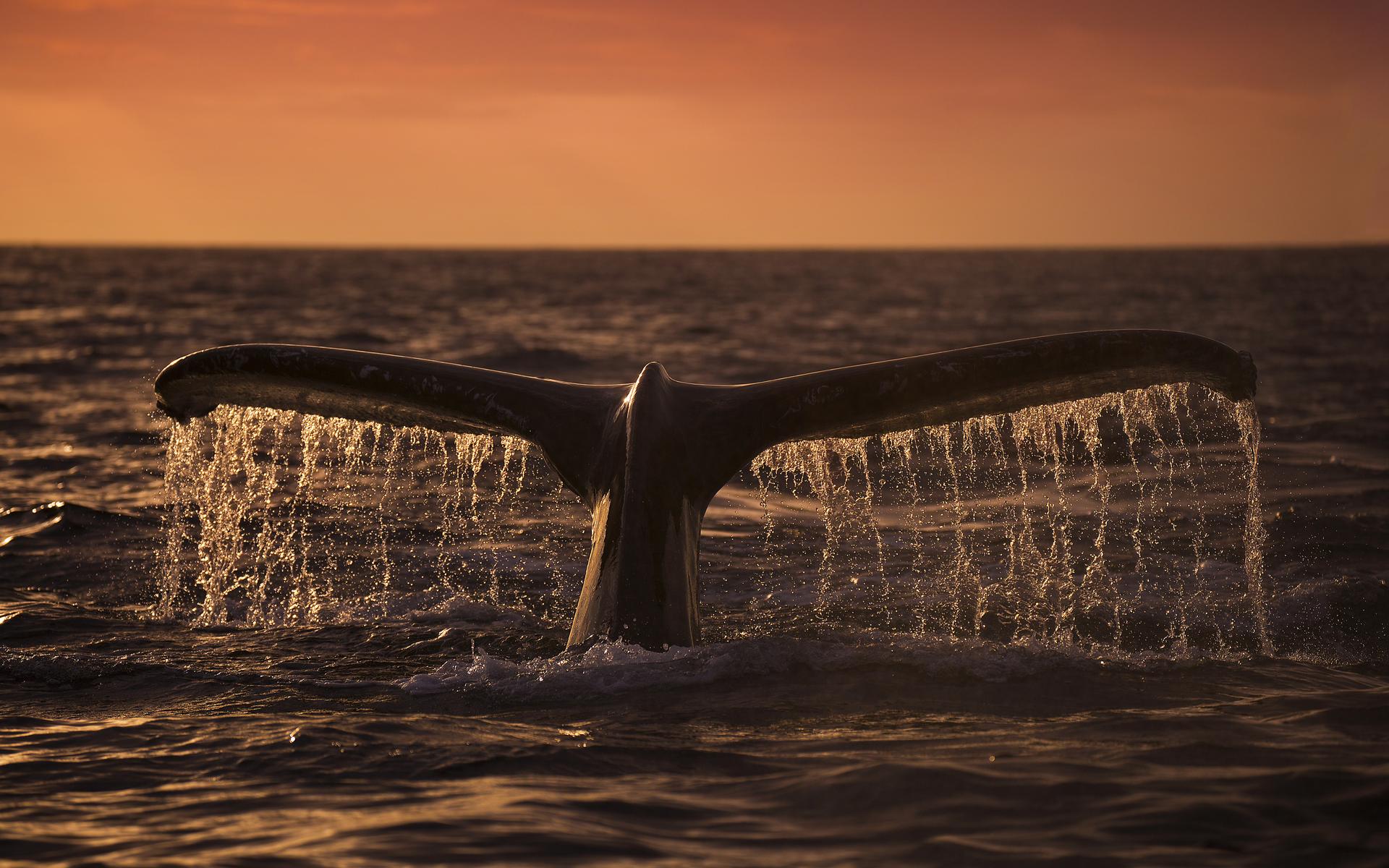 bitcoin price whale