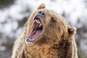 bitcoin price prediction bears