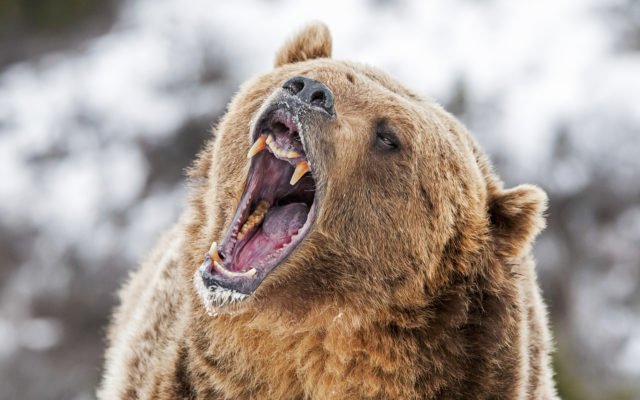 Bitcoin Price Analysis: Bears Struggle To Gain Momentum