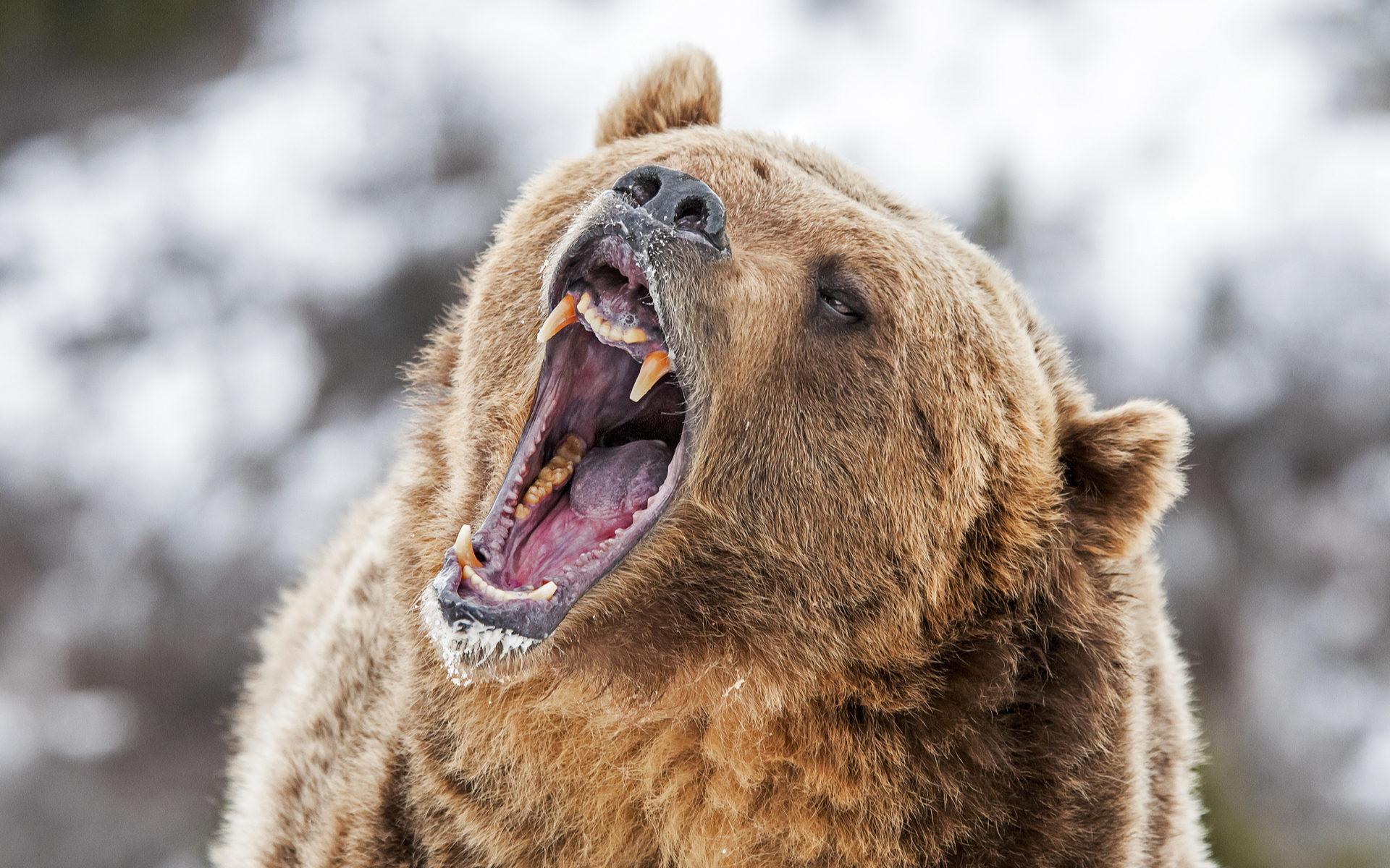 bitcoin price prediction bears