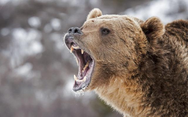 Litecoin price bears roaring