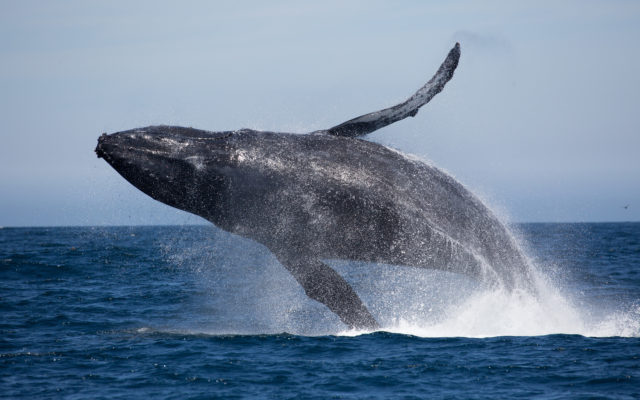Bitcoin Price Analysis: Whales Test Weak Hands At Key Support