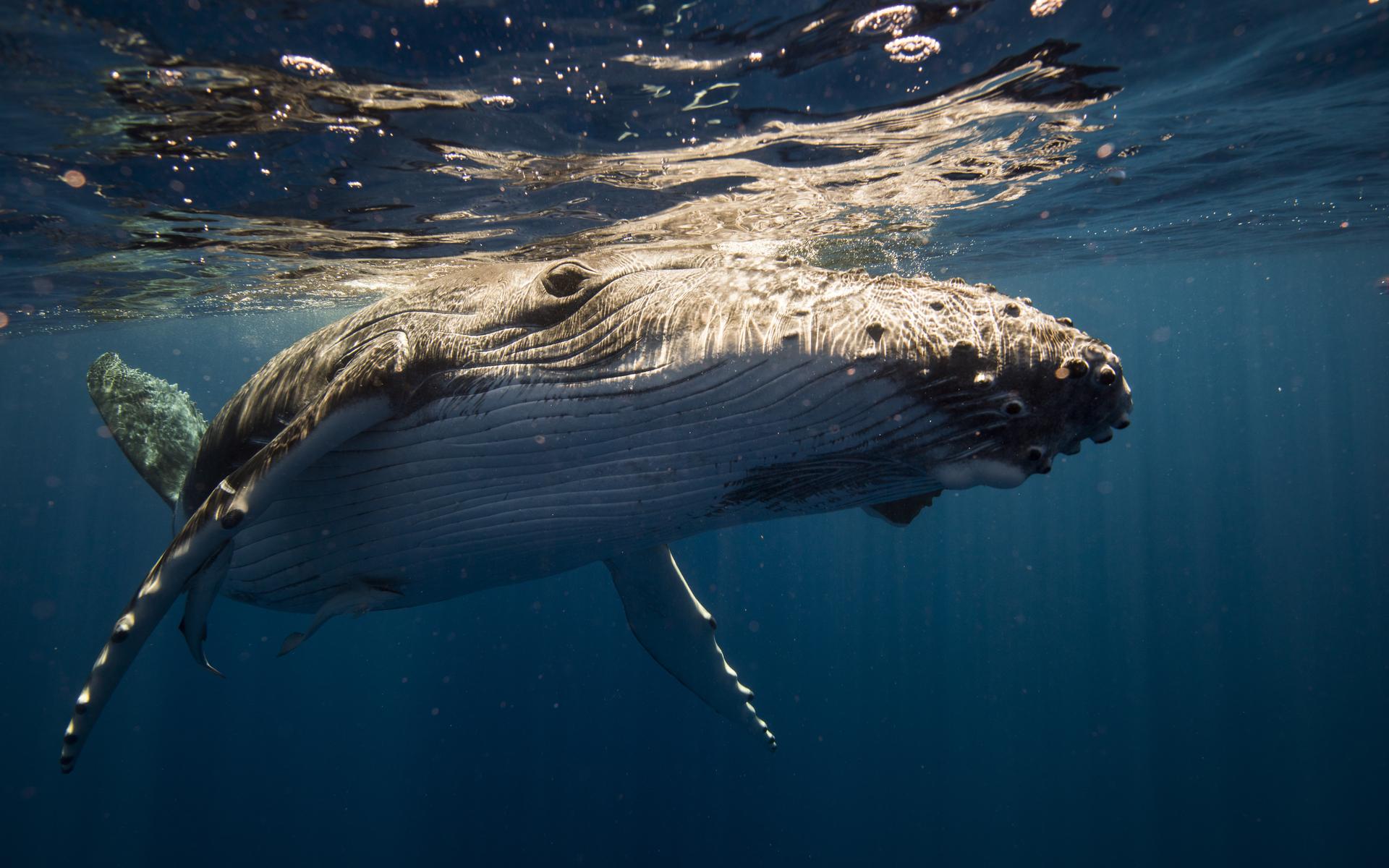 bitcoin crashes as whale dumps on Huobi