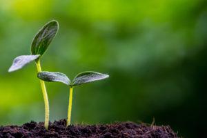 InstaDapp Raises Seed Funding Pantera