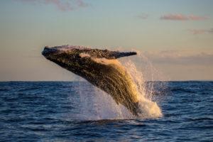 bitcoin whale moves btc