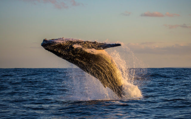 bitcoin whale moves btc