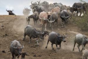 Bitcoin Bull Run to start on Thursday