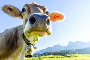 Dash investors money returns, Moocowmoo returns