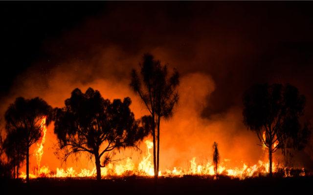 bitcoin for australia wild fires