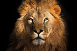 Bitfinex LEO Token Enters Top 10 Crypto List