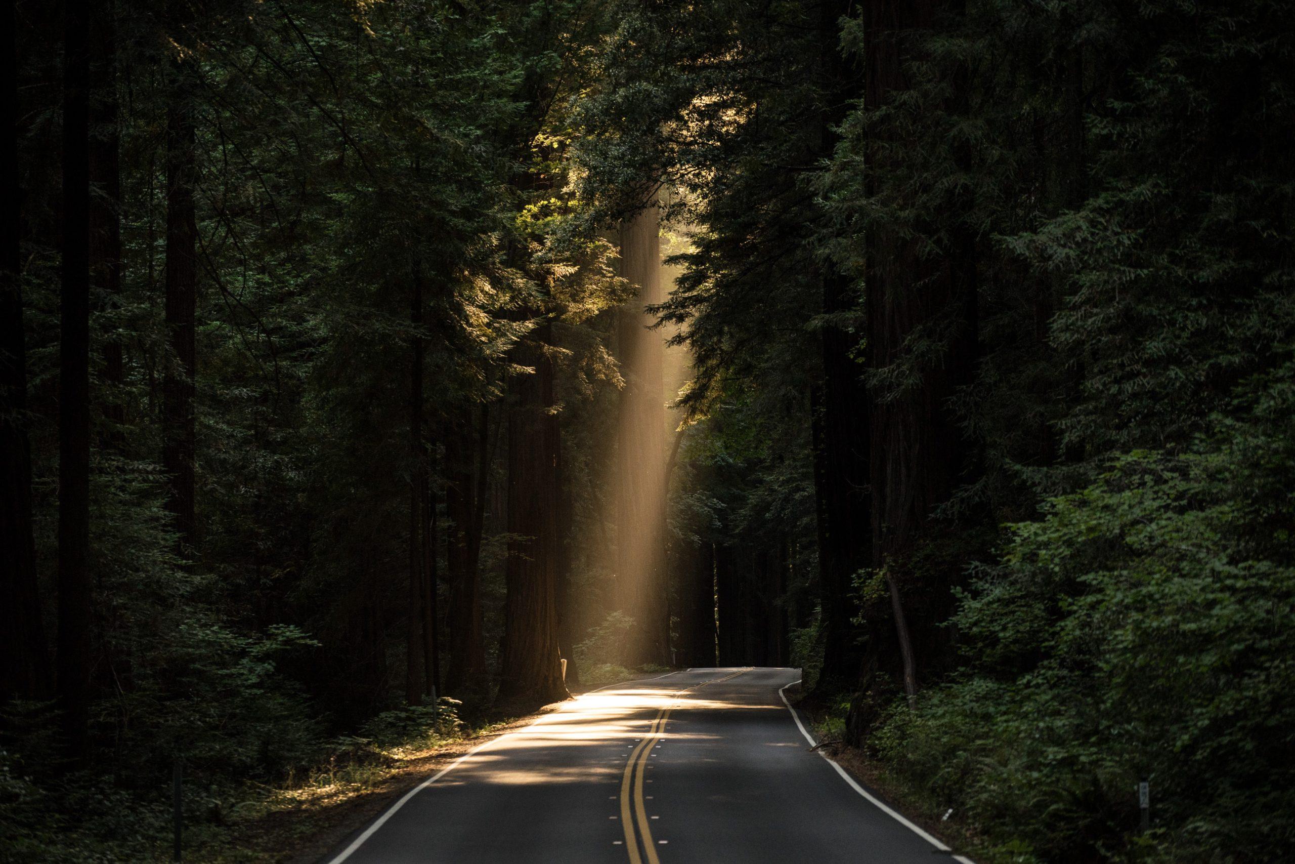 sunlight peaking through trees featured image