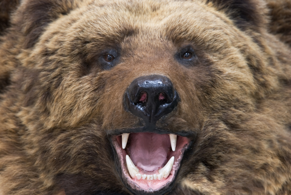 Bitcoin Analyst Alerts of Looming 'Bear Cross' as Price Jumps Higher