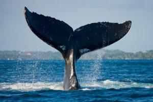 Kirobo Launches KIRO Token with 'Whale-Proof' Staking Mechanism