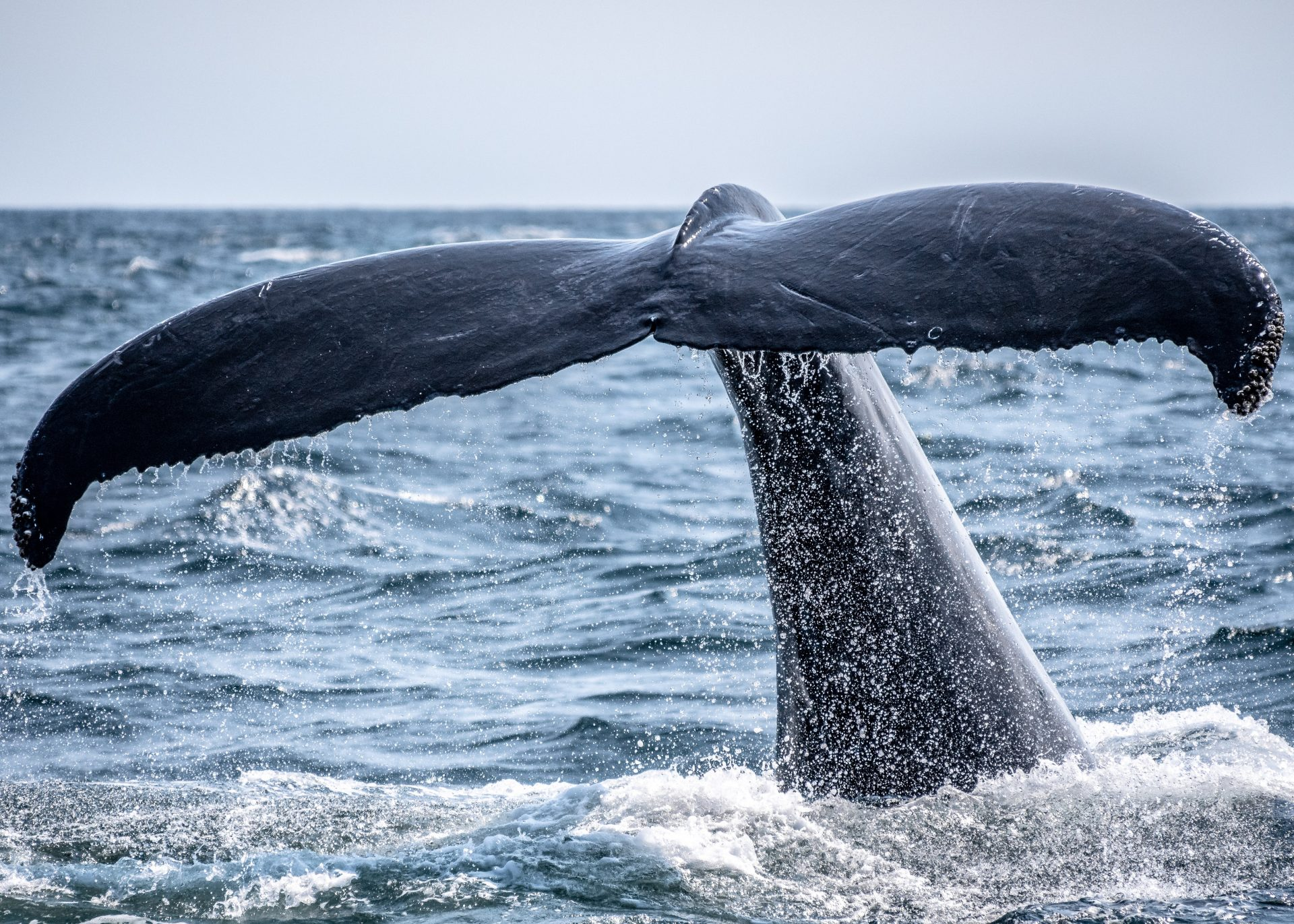 Data Suggests Whales are Keen on Protecting One Key Bitcoin Support Level