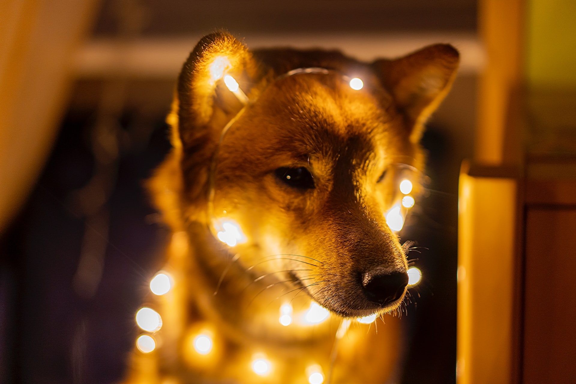 Dogecoin (DOGE) Blasts Higher in Another Nonsense Rally; What's Next?