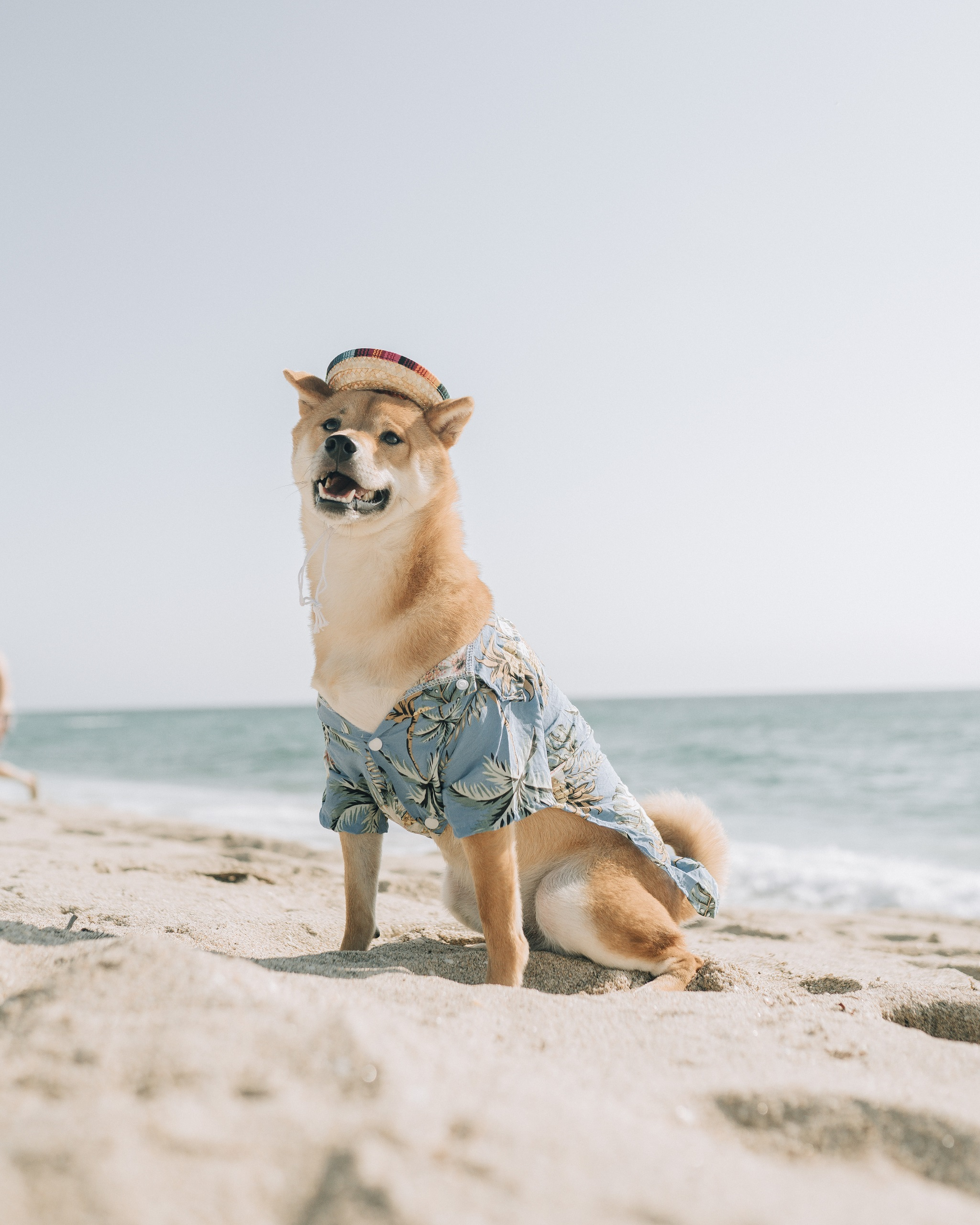 Doge at the beach, for DogeCoin